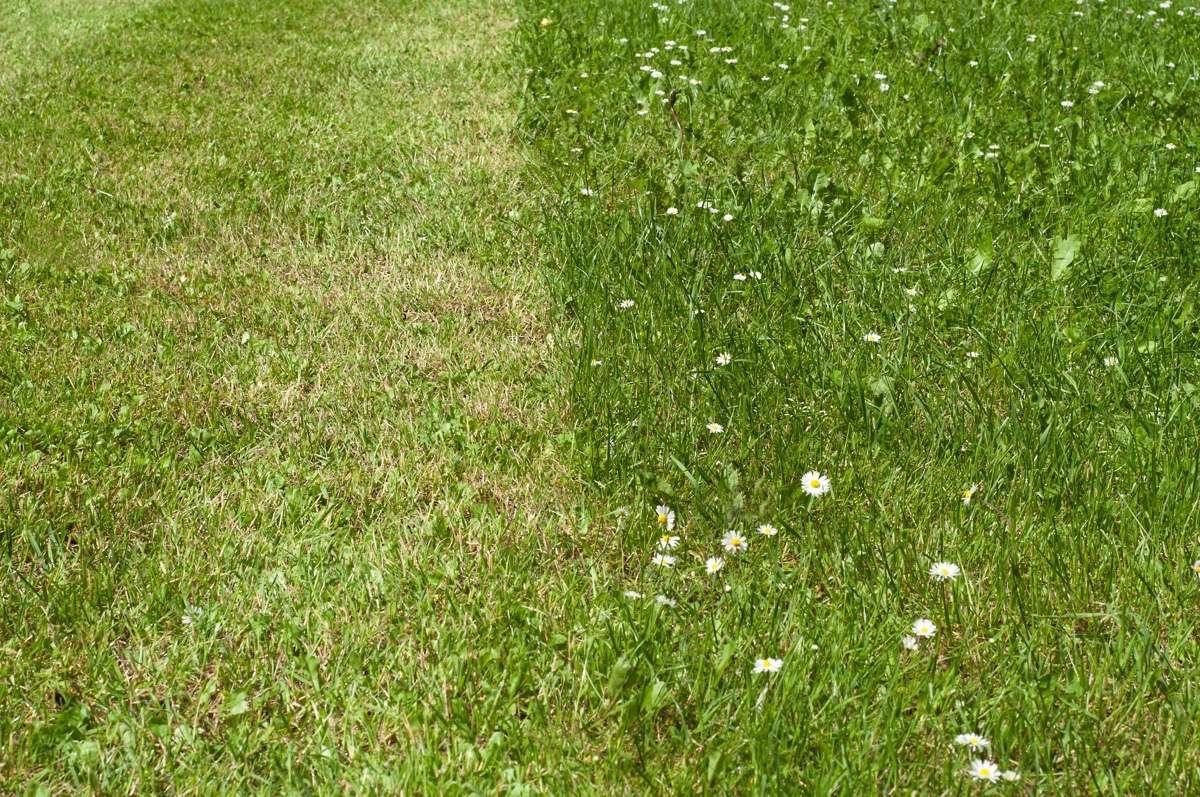 Aménagement et entretien de jardins-Val d\'oise(95)-Herblay-Taverny ...